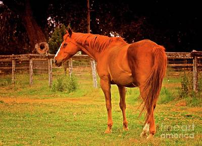 Chestnut Mare Santa Ynez California Original by Gus McCrea