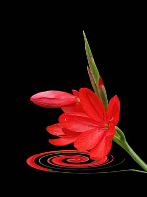 Chic - Ritzy Red Lily Print by Gill Billington