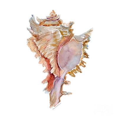 Fox Painting - Chicoreus Ramosus Shell by Amy Kirkpatrick