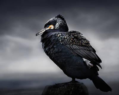 Cormorant Photograph - Chief by Martin Eilertsen