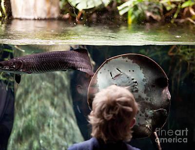 Batoidea Photograph - Child And Ray Fish In Paludarium by Arletta Cwalina