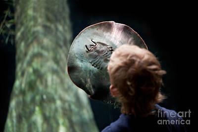 Batoidea Photograph - Child Watching Ray Fish by Arletta Cwalina
