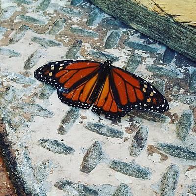 Chillin Butterfly Print by Jera Sky
