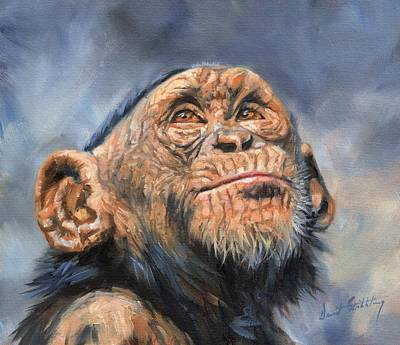 Ape Painting - Chimp by David Stribbling