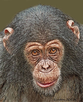Ape Digital Art - Chimp Portrait by Larry Linton