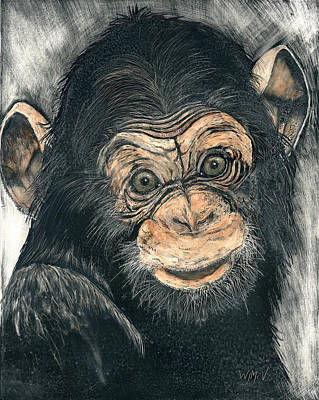 Chimpanzee Mixed Media - Chimpanzee by Wanda McVeigh