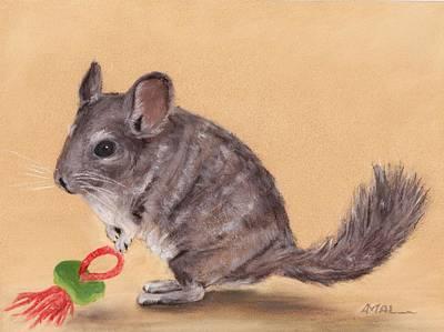 Drawing - Chinchilla by Anastasiya Malakhova