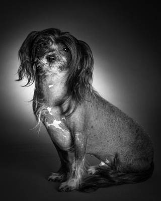 Black And White Photograph - Chinese Crested - 01 by Larry Carr