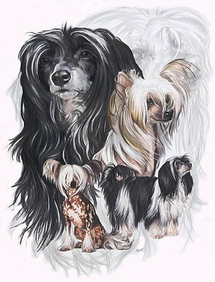 Purebred Drawing - Chinese Crested And Powderpuff W/ghost by Barbara Keith