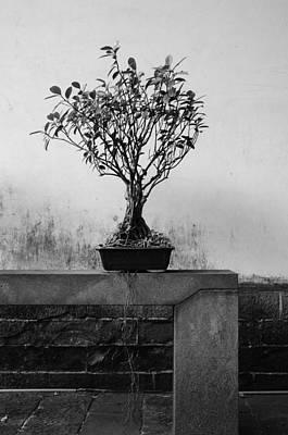 Green Photograph - Chinese Style Garden / Shoot By Digital / No.2 by Fan Ying Hua