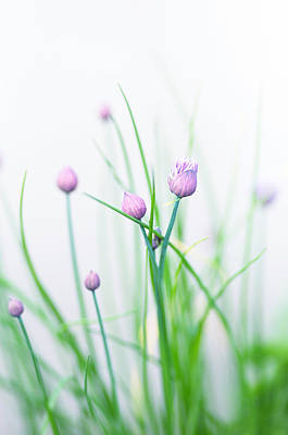Chives Photograph - Chives 1 by Rebecca Cozart
