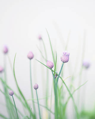 Chives Photograph - Chives 2 by Rebecca Cozart
