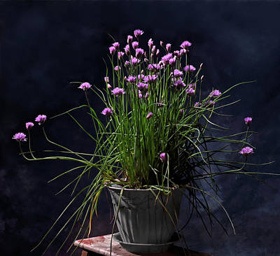 Chives Photograph - Chives by Don Spenner