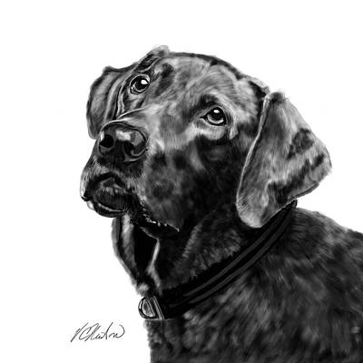 Chocolate Labrador Retriever Digital Art - Chocolate Labr by Victoria Newton