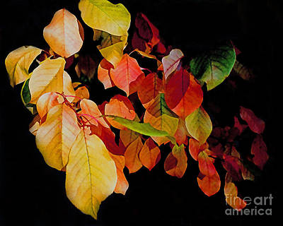 Chokecherry Leaves Print by Terril Heilman