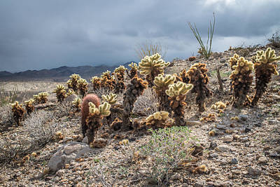 Cholla Family With Guests Print by Shuwen Wu