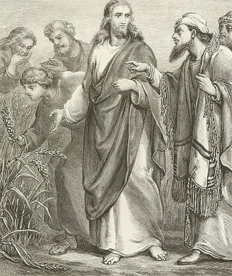 Saviour Drawing - Christ And His Disciples In The Cornfields by English School