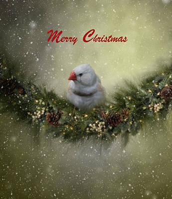 Wildlife Celebration Photograph - Christmas Greetings by Kim Hojnacki