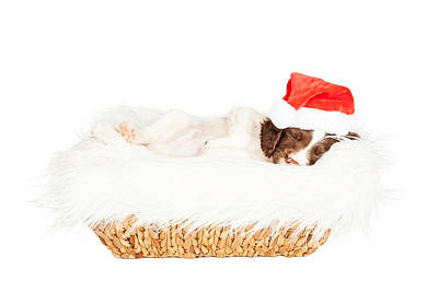 Christmas Puppy Sleeping In Basket Print by Susan Schmitz