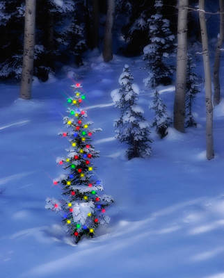 Snowy Night Photograph - Christmas Tree In Snow by Utah Images