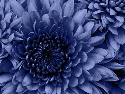 Chrysanthemum Blue Print by Amanda Schambon