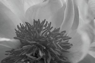 Chrysanthemum Macro Black And White 1 Print by Jose Valeriano