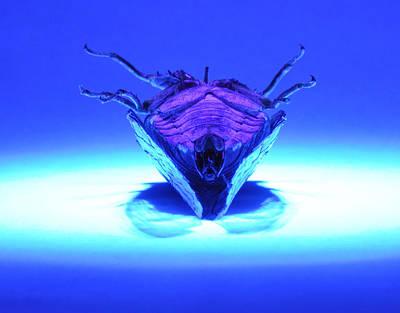 Cicada Photograph - Cicada In Uv by Mark Fuller