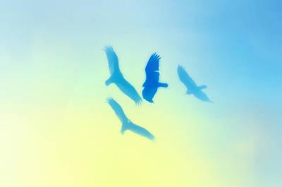 Hawk Digital Art - Circling by Bill Cannon