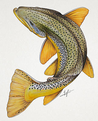 Circling Brown Trout Print by Nick Laferriere