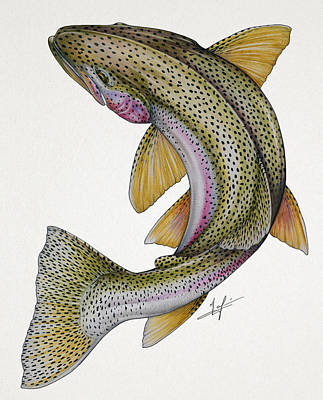 Trout Drawing - Circling Rainbow Trout by Nick Laferriere