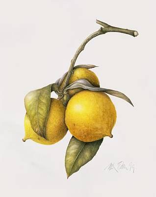Vines Drawing - Citrus Bergamot by Margaret Ann Eden