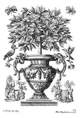 Garden Drawing - Citrus Trees by Martin Engelbrecht