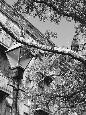 Photograph - City Bird Black And White by Robin Lewis