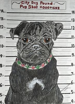 City Dog Pound Pug Shot Print by Kathy Marrs Chandler