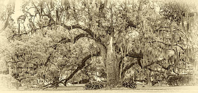 Live Oaks Photograph - City Park Giant 3 Sepia by Steve Harrington