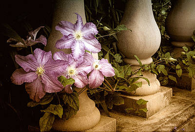 Clematis In The Garden Print by Julie Palencia