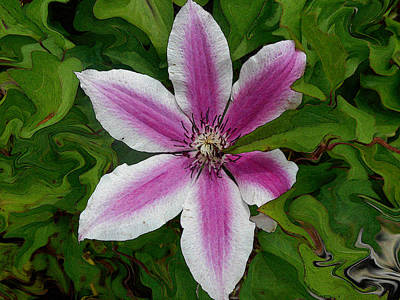 Clematis Painting - Clematis  by Kathy  Symonds