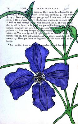 French Open Drawing - Clematis by Kelly Basinger