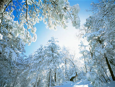 Winter Trees Photograph - Cleveland National Forest Ca Usa by Panoramic Images