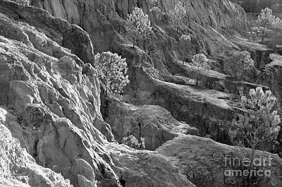 Ludo Photograph - Cliff Pine Trees In Monochrome by Angelo DeVal