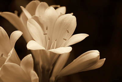 Sepia Flowers Photograph - Clivia Floral In Sepia Monochrome by Jennie Marie Schell