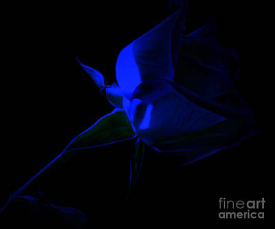 Blue Flowers Photograph - Close To Me by Krissy Katsimbras