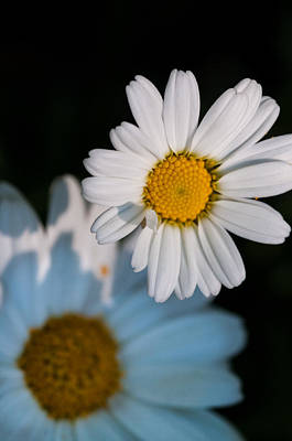 Simple Beauty In Colors Digital Art - Close Up Daisy by Nathan Wright
