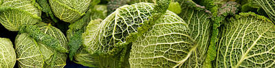 Cabbage Photograph - Close-up Of Savoy Cabbages Brassica by Panoramic Images
