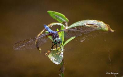 Dragonfly Eyes Photograph - Closeup Callaway Gardens Dragonfly Art by Reid Callaway