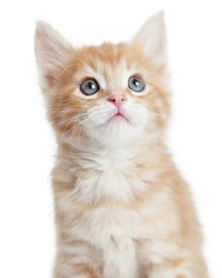Closeup Portrait Cute Orange Tabby Kitty Print by Susan Schmitz