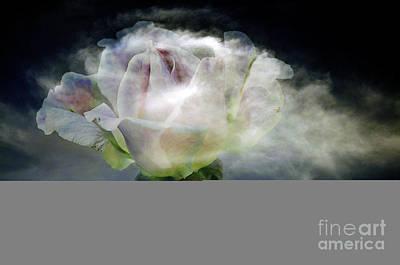 Cloud Rose Print by Clayton Bruster