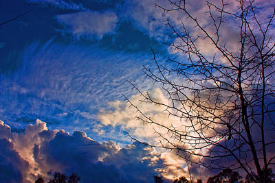 Clouds And Tree Print by John Scholey