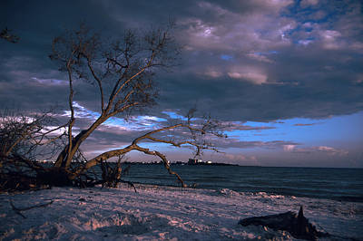 Beach Photograph - Cloudy Beach Tree by Michael Frizzell