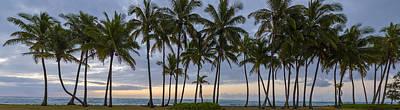 Outdoors Photograph - Cluster On Kauai by Jon Glaser